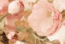 minty pinks