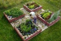 Garden: Landscape