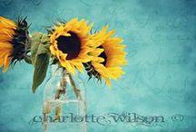 turquoise & sunflowers