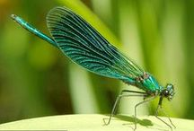 Inspiration / Beautiful things to help my mind create. Dragonflies.
