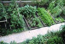 My veggie garden plants