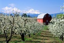 Hood River / by The Fruit Company