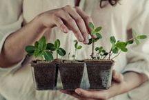 Lifestyle: gardening&farming / by Jean Lake