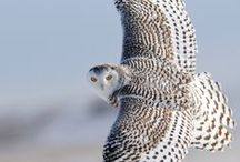 Madarak/Birds / Virtual Bird Watching