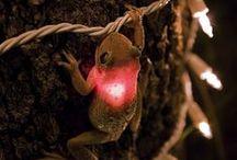 frogs ♡ / by Elizabeth Douglas