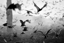 """""""Flying Critters"""" / by Dead Fred"""