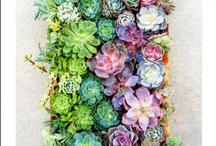 Outdoor Ideas / by Abby S.