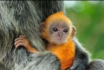 Animals that make you go 'Awe'