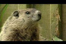 Groundhog Day / by Rachel Licari