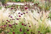 Puutarhan kasvit - Plants / Kauniita kasveja ja niiden yhdistelmiä puutarhaan