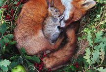 animals / by Jessica Webb