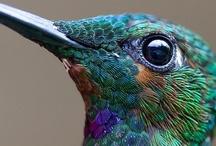 F A U N A | birds