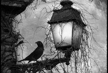 Halloween / by Nancy Donahue