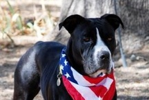 Animals for Adoption / by Placer SPCA