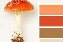 Color Life / Colors