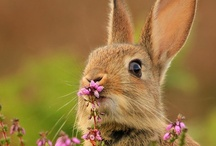 Springtime / Literally nature's breath of Fresh Air ~~~~~~~ Includes Easter fun