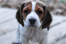 Cuddlesome / Complete Gratuitous Adorability.  Cute & Cuddly things to enjoy... particularly baby animals