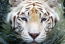 Animal Magnetism / The Animal Kingdom - what draws us, inspires us... reveals how we are the same - captured here