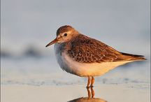 Fugler /oiseaux / by Anne Fra Sveits
