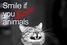 Just to Make You Smile / Need a pick me up?  Enjoy videos, pictures and amazing animal stories here!