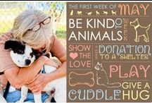 Adoption Animals