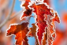 Falling Leaves / That Snap in the air... fall chores & fairs... frosty morns... and everyone wants to cuddle up at home at the end of the day . Nature sends forth its final bounty before slipping into the quiet slumber of winter, giving us the golden hues and lusty breezes of Autumn