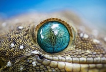 Our World - Up Close / Get eye to eye w/ Nature - regardez the Wonders of our World through the camera's magical eye / by ✿ Renee Adams ✿