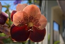 In love with orchids / Orchids are so beautiful. So many species, shapes, and colors. #orchids #flowers #dorenenaples