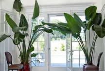 Indoor plants, accents and freezes