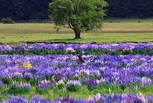 Wonderful Things of Nature