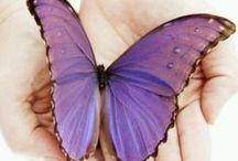 lilac&purple / by Amor Sacamor