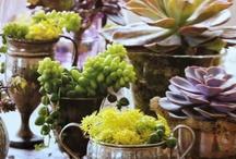 Pots & Plants