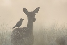 Animal Kingdom / by Penny Herring