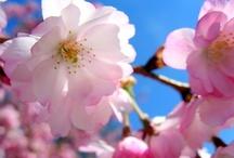 Frühling / Spring / Frühlingsgefühle. / Spring fever.