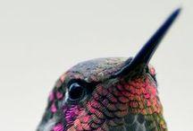 Avian amazing