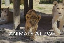 Animals at ZWF / A few of our furry and scaly friends at The Zoological Wildlife Foundation!