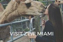 Visit ZWFMiami / Our guests' favorite photos of their tour & their testimonials!
