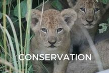 Conservation / Creating economic incentives to protect wildlife.
