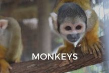 Monkeys / Funny, quirky, fast & friendly...Here is our wold of monkeys.