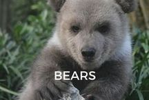 Bears / Eva arrived from a preserve in Illinois when she was 3 weeks old. She is such a cutie!