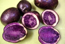 Purples / lavendars, violets and deep rich indigos