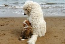 Mascotas / Adorables Animales Hogareños