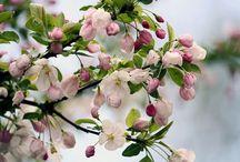 Flower / by Magda Wiener