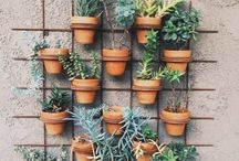 GARDEN / I'm the worst gardener ever but love to be inspired by other people's beautiful gardens.  Gardening ideas, tips and inspiration.  Outdoor landscaping, deck, porch and patio containers, indoor gardens.