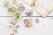 FLORAL / Floral vignettes and arrangements.