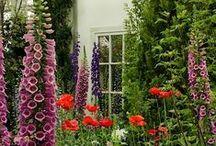 My Beautiful Garden / by Meredith Vogel