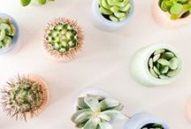 SUCCULENTS / Ideas, inspiration, tips and photography for all things succulent.