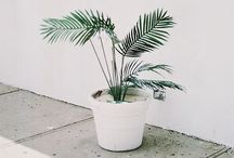 HOUSEPLANTS / Styling and decorating with house plants.  How to choose house plants. Tips for taking care of houseplants.