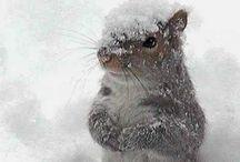 winter inspiration