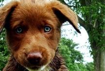 Pets I'd like / by CindylivingbyHisword Mikuls